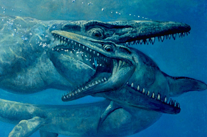 Fighting Mosasaurs